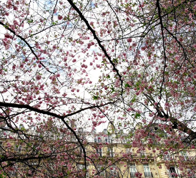 Spring Luxembourg Gardens Paris