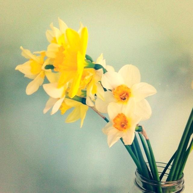 Daffodils Bremen Maine