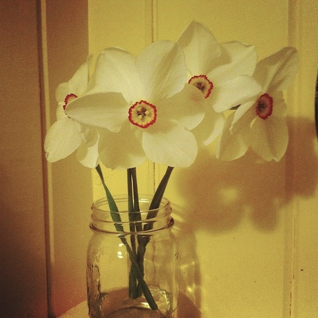 More Daffodils Maine