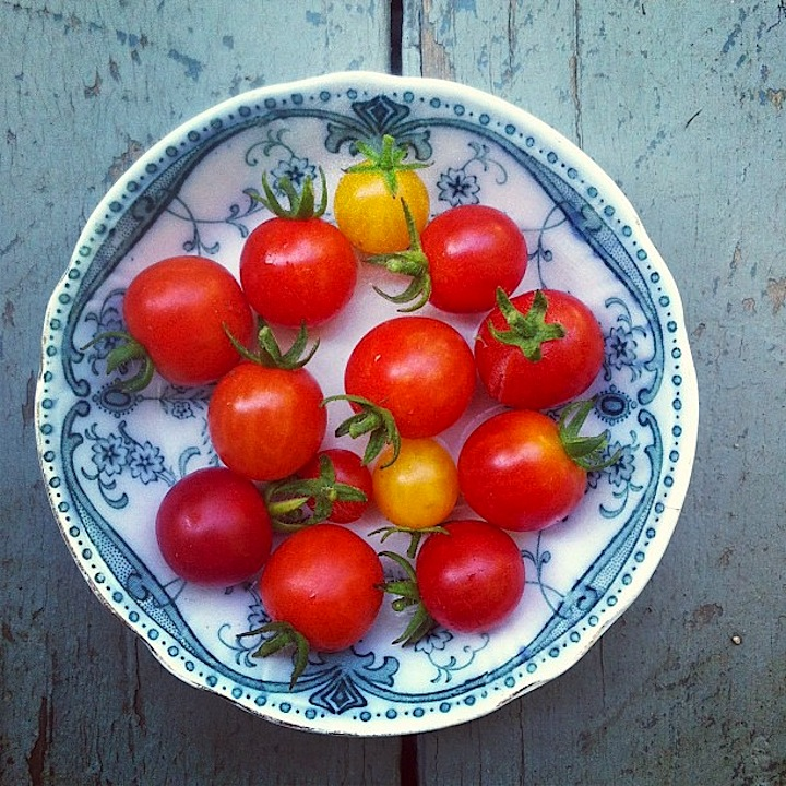 Cherry Tomatoes from our garden- first