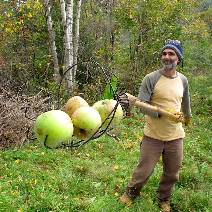 Maine Apples Organic
