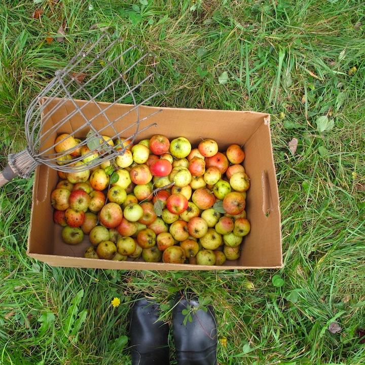 Apples in box