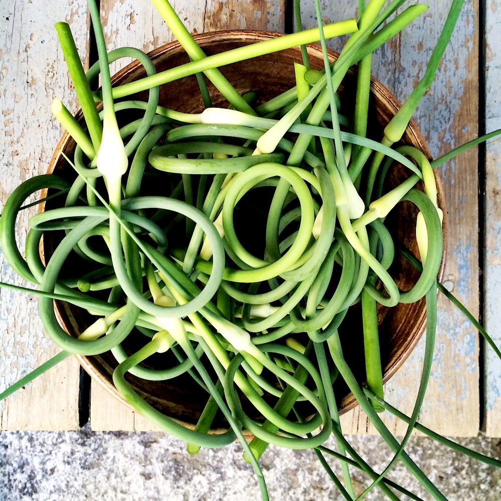 Garlic Scapes Organic Maine Erica Berman