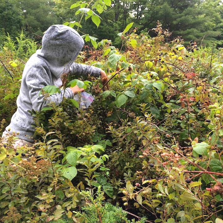 2014-08-13 10.37.01 Picking Blackberries in the rain