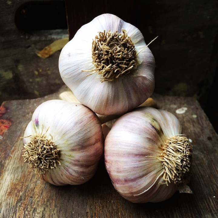 Garlic Erica Berman