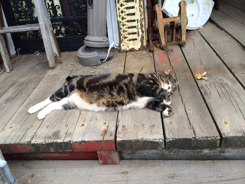 Fat happy cat