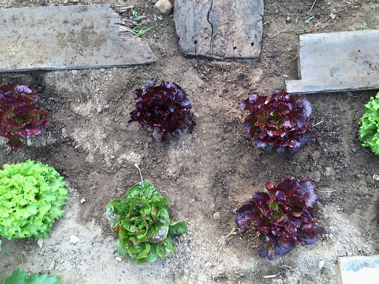 Happy Organic salad Maine