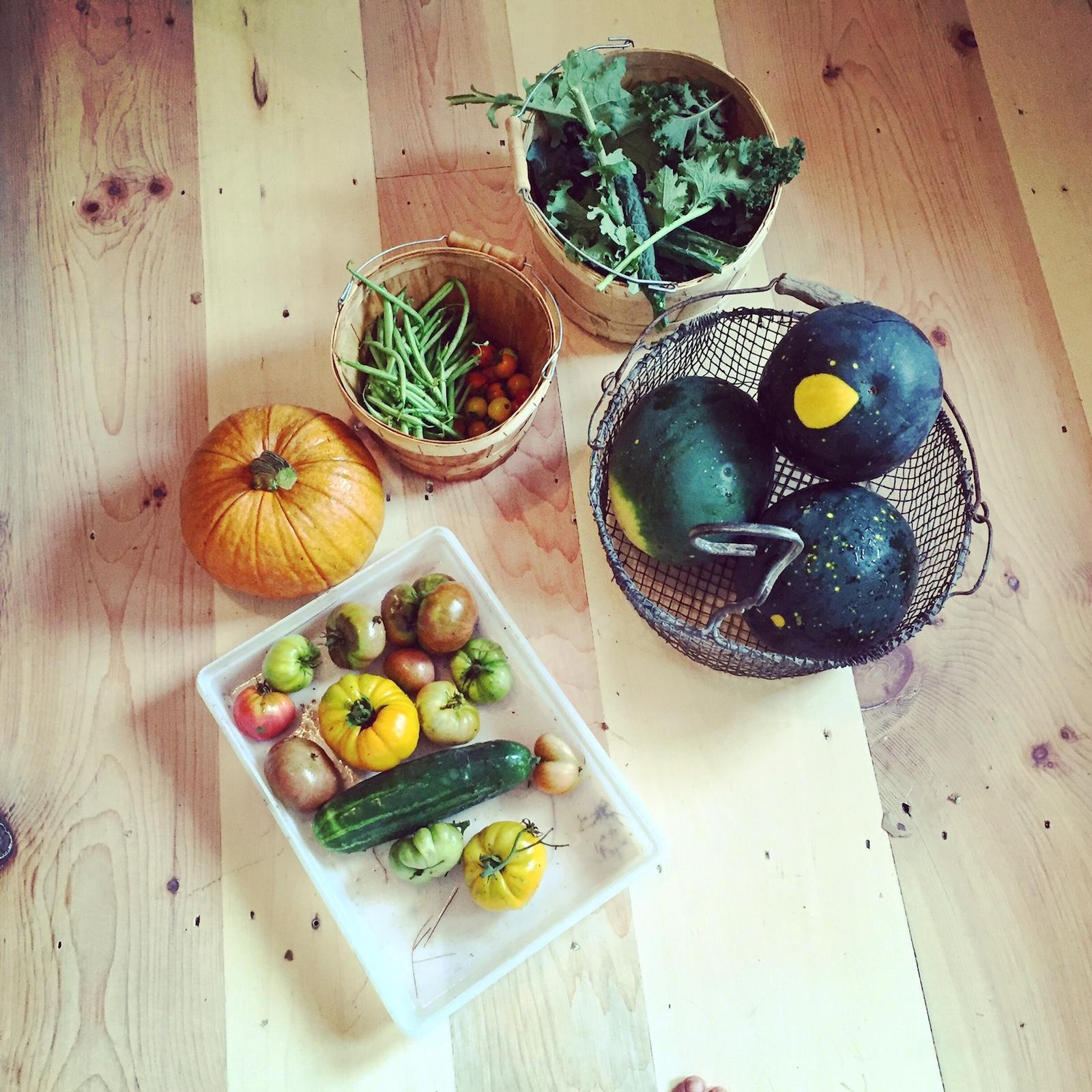 August Harvest Maine