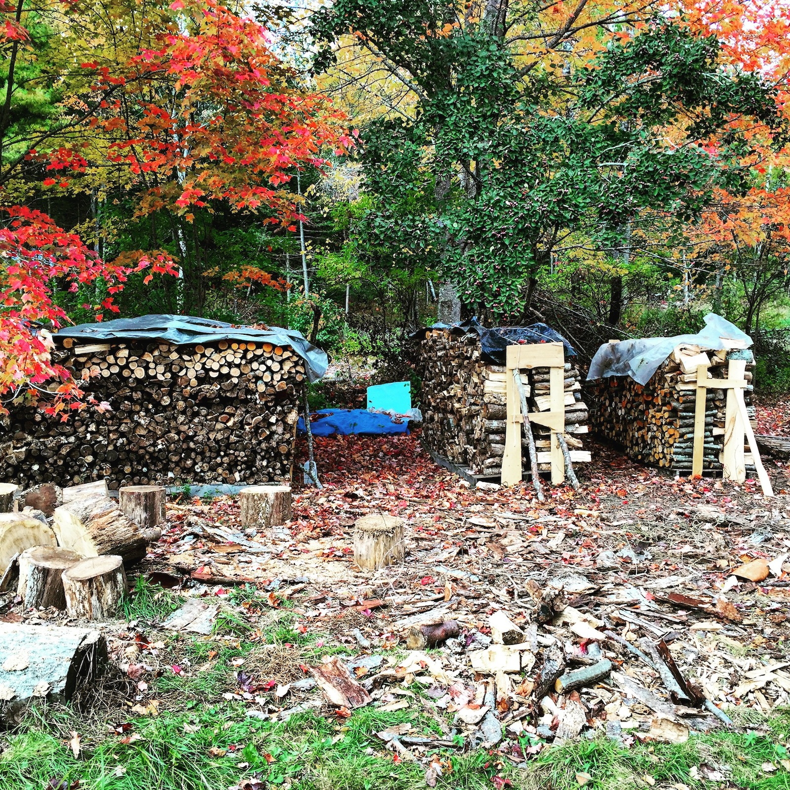 Wood stacked for winter in Maine