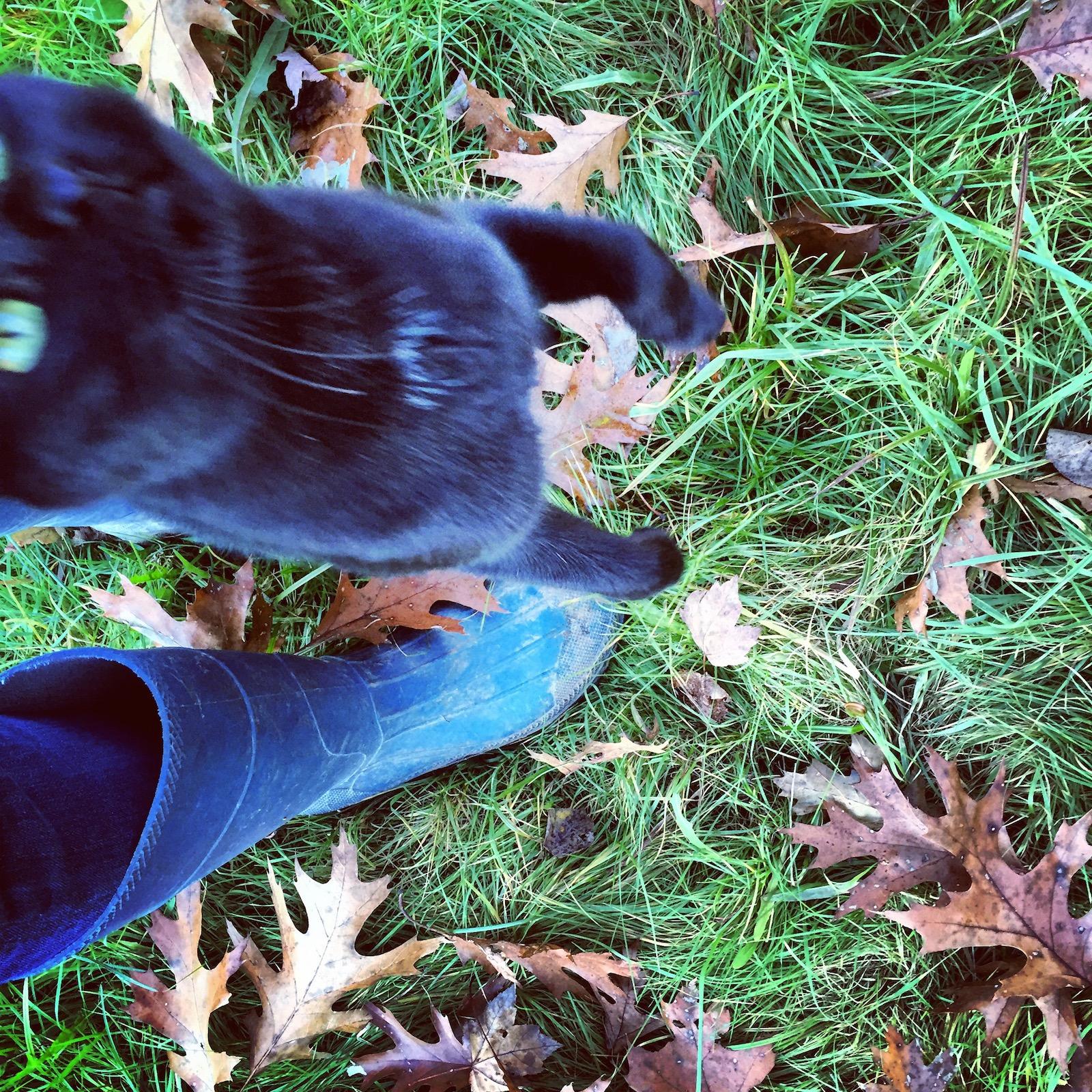 Black kitty says hello