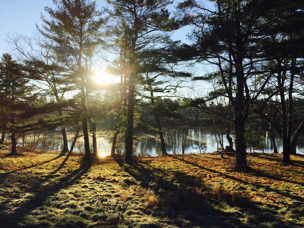 Maine morning light