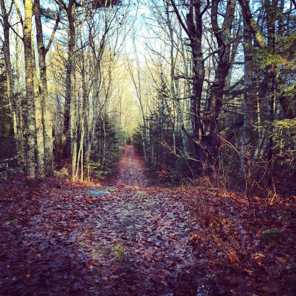Woods in Maine