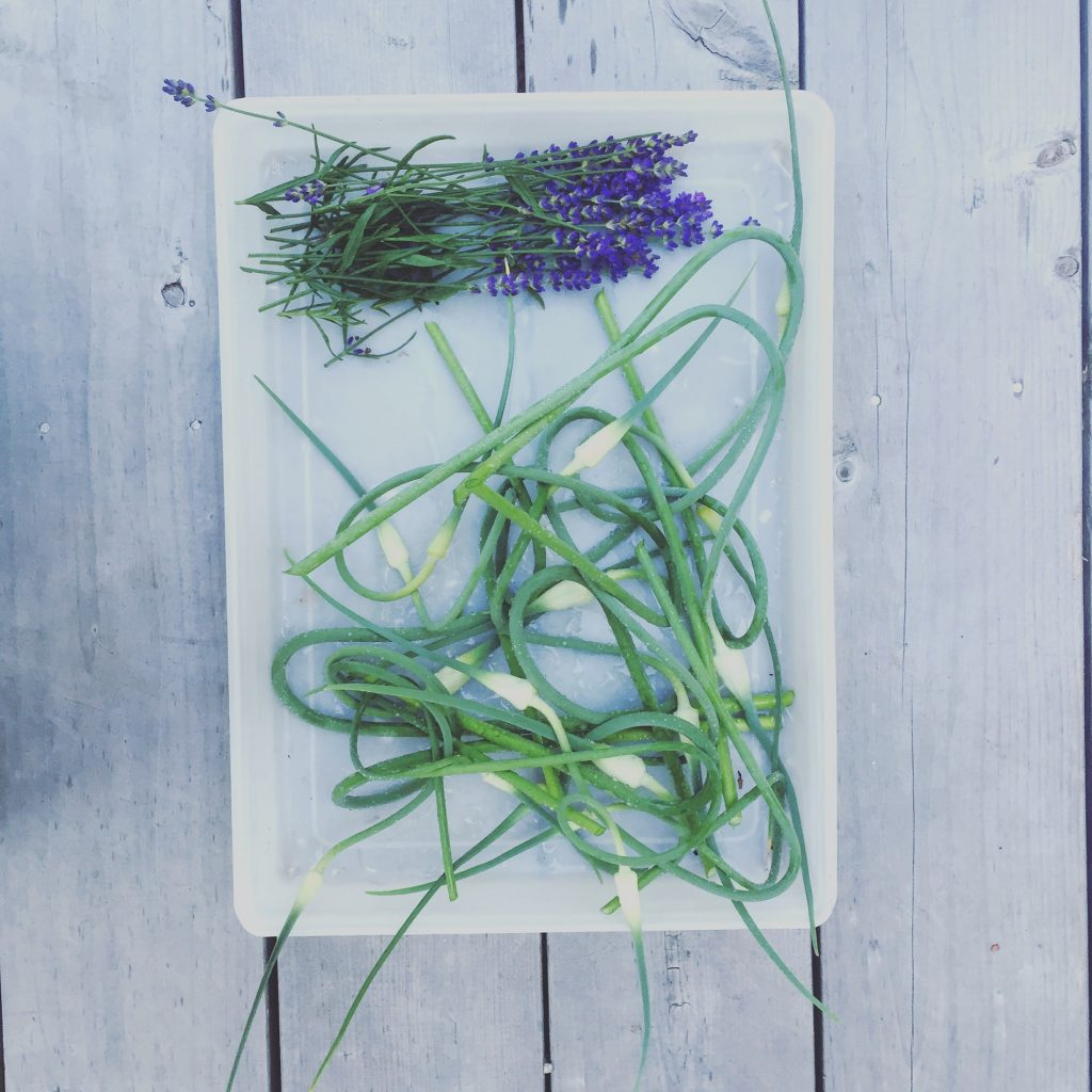 Scapes and lavender