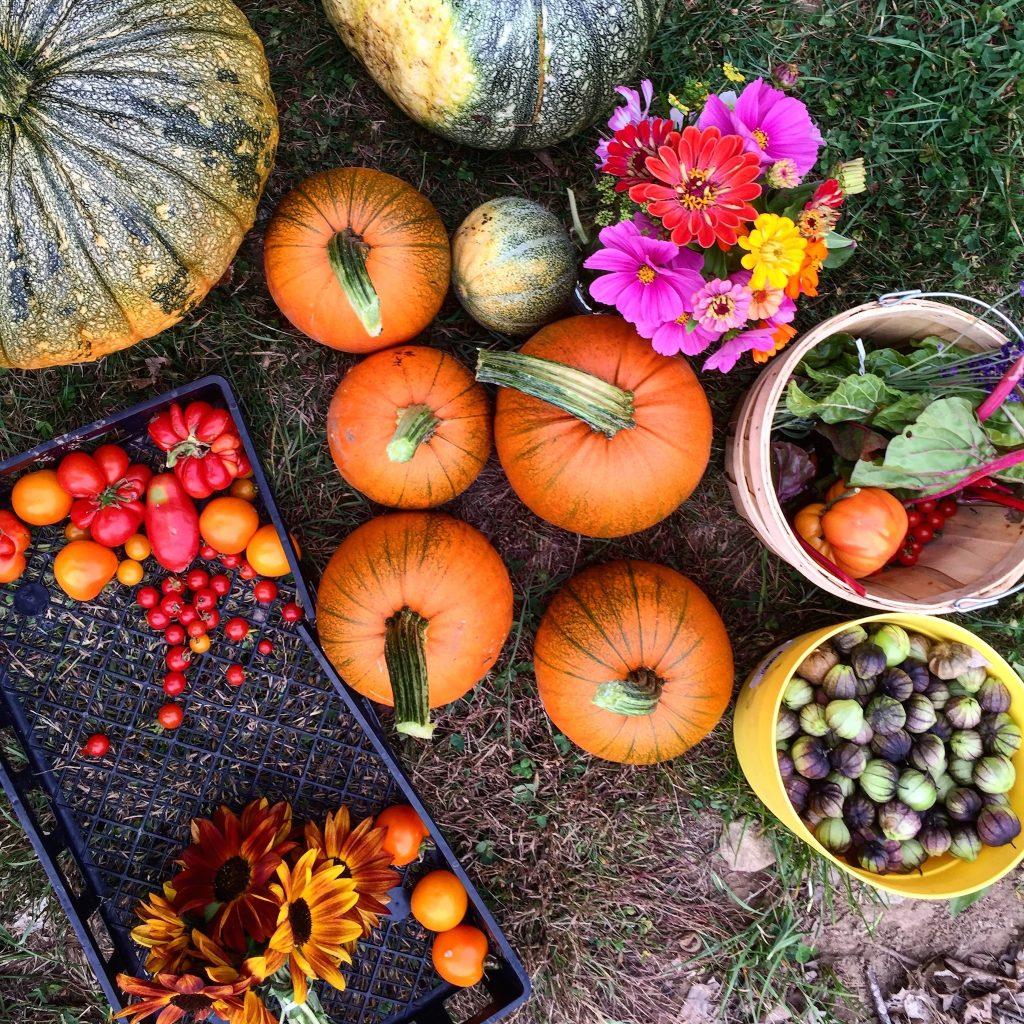 harvest-october-8-2016