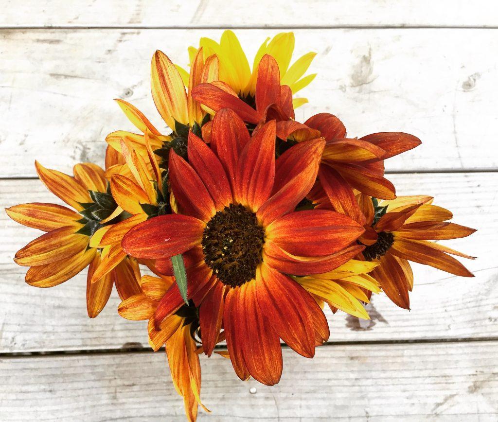 sunflowers-october-2016