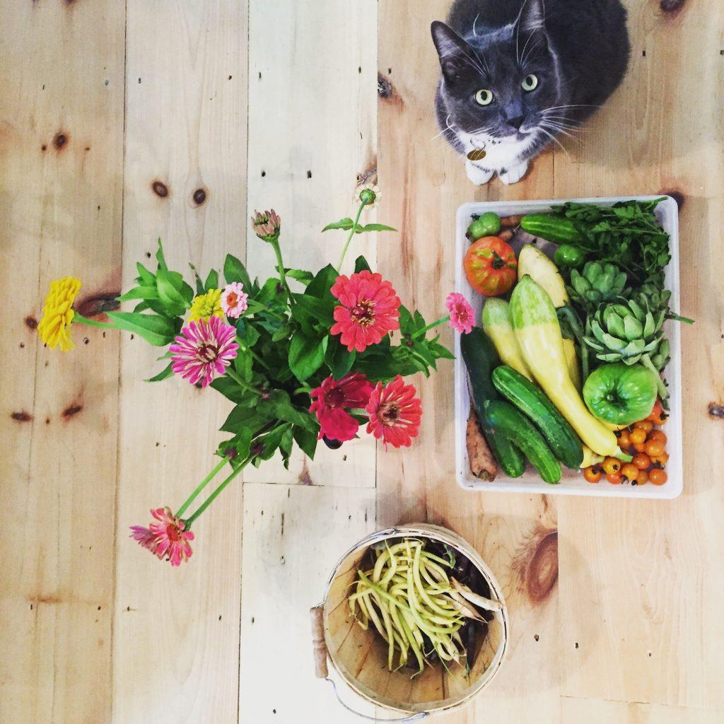 Kitty and Garden Goods