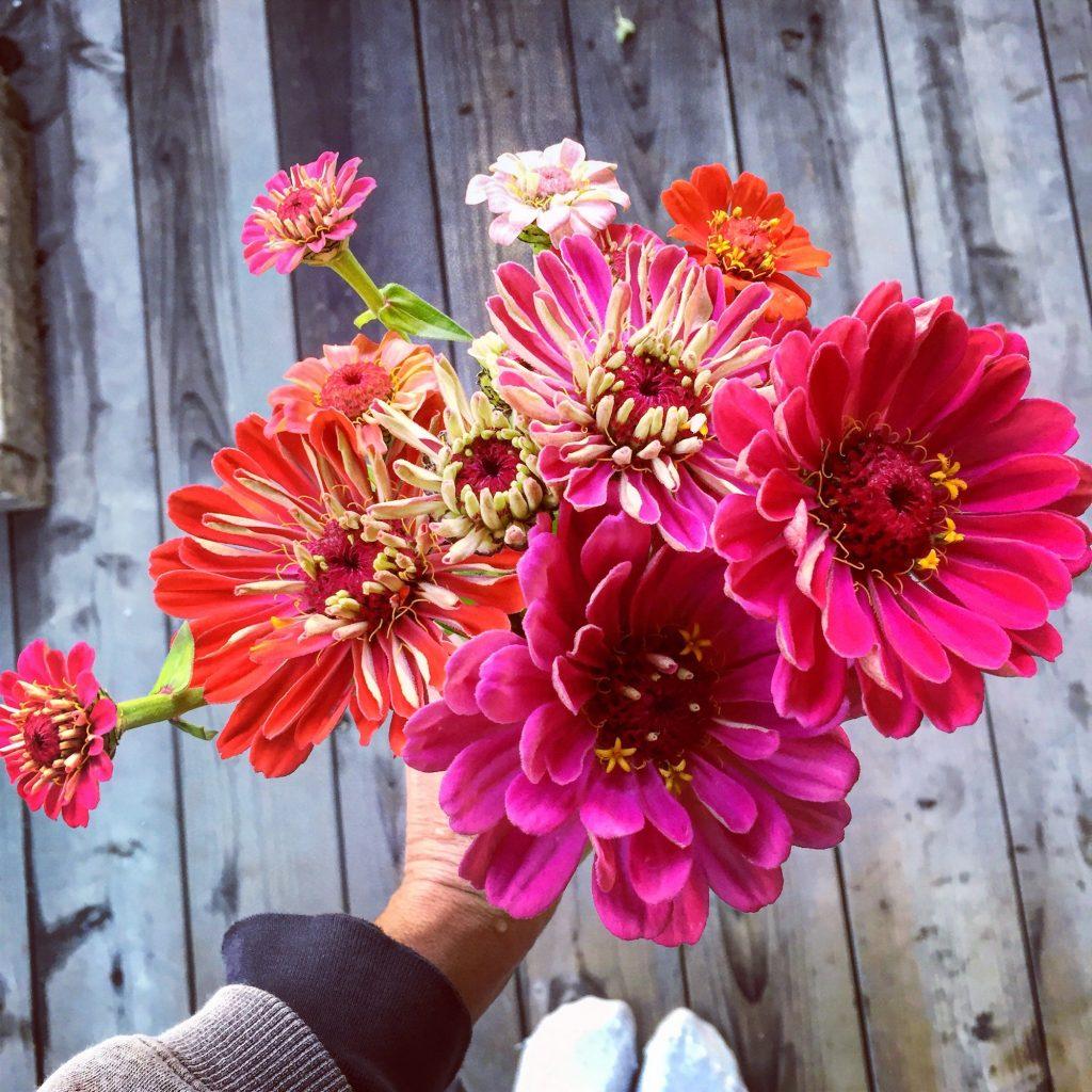 Last Zinnia Bouquet